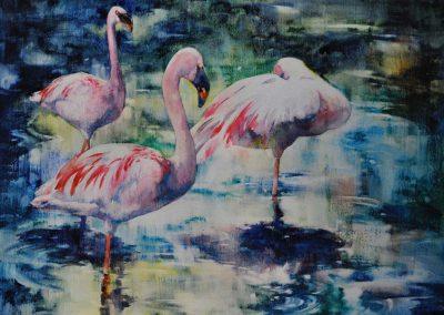 Resting Flamingos